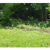 Picture of lot 17 Streamview CT, BELLBROOK, OH 45305