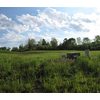 Picture of 0 Northerton Court-Lot #10, VANDALIA, OH 45414